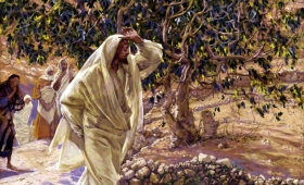 ujrzeli drzewo figowe uschłe od korzeni