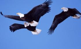 tam zgromadzą się i orły