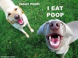 Nie dawajcie psom tego, co święte…