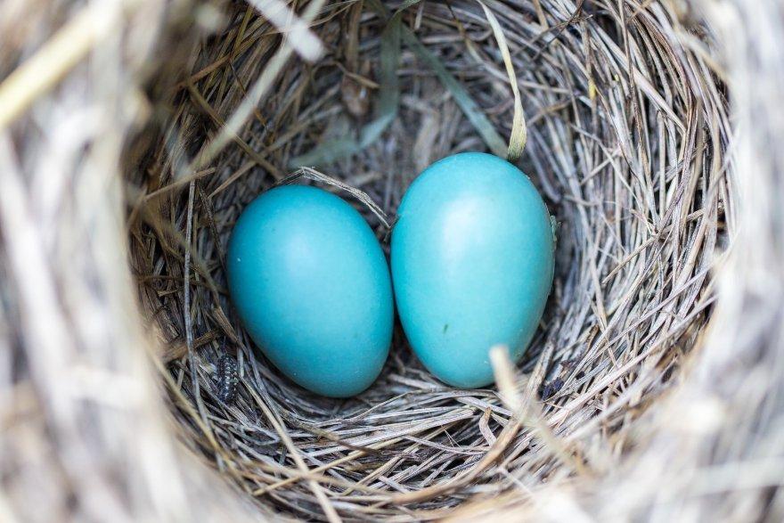 chciałem zgromadzić twoje dzieci, jak ptak swoje pisklęta pod skrzydła