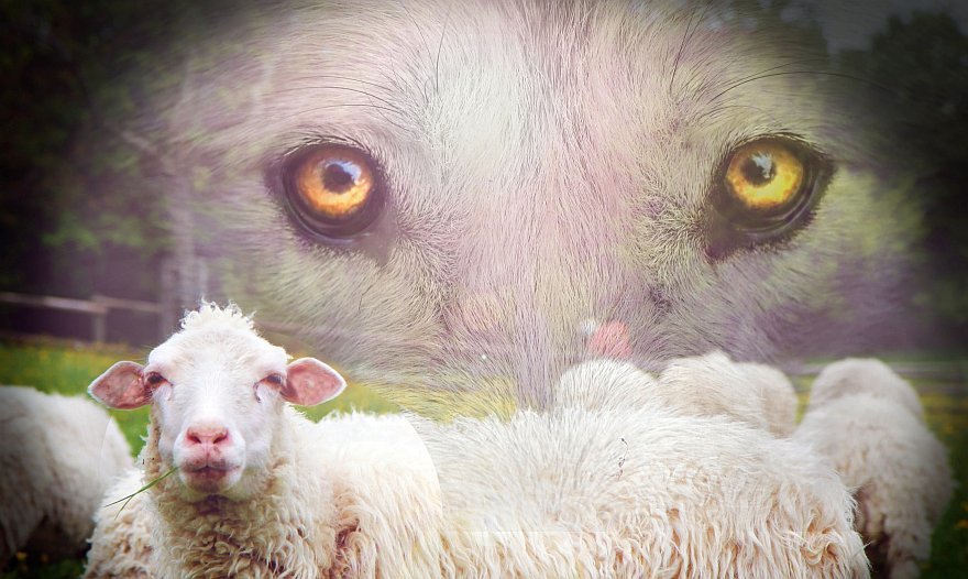Najemnik zaś i ten, kto nie jest pasterzem…