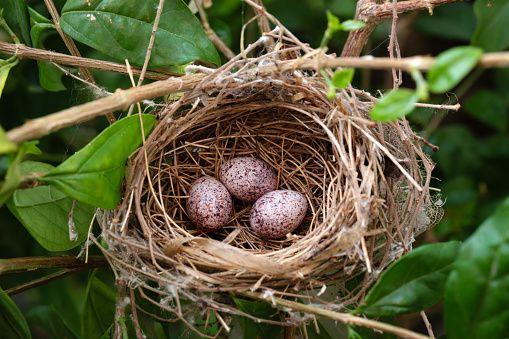 Lisy mają nory i ptaki podniebne – gniazda